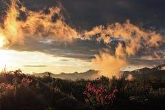 在日出的用花装饰的山 库存图片