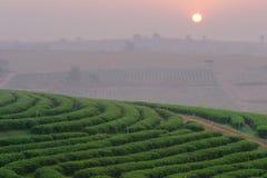 在日出的种植园风景 库存照片