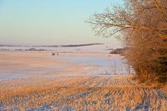 在日出的粮田在冬天 免版税库存照片
