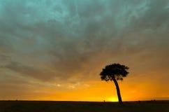 在日出的结构树 免版税库存照片