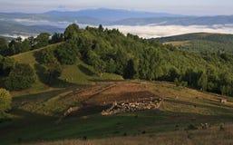 在日出的羊圈 库存照片