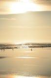 在日出的美丽的金黄海滩 免版税库存照片