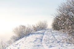 在日出的美好的淡色闪耀的冬天风景在与在树冰盖的树的一个冷的早晨 库存图片