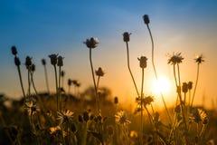 在日出的花与五颜六色的天空 免版税图库摄影