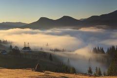 在日出的薄雾 库存照片