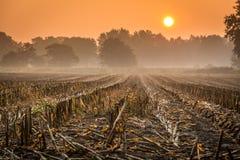 在日出的被收获的麦地 库存照片