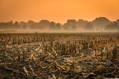 在日出的被收获的麦地 库存图片