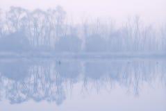 在日出的野生生物在雾 免版税库存图片