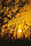 在日出的金花卉背景 库存照片