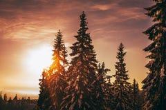 在日出的雪树 喀尔巴阡山脉的山顶视图 免版税图库摄影
