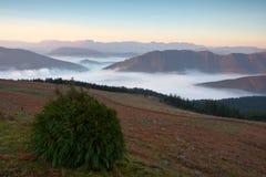 在日出的雾 免版税库存照片
