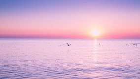 在日出的飞行海鸥在平安的海和朝阳的背景的海 免版税库存图片