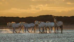 在日出的马 免版税图库摄影