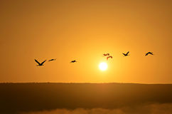 在日出的鸟在薄雾和山 免版税库存图片