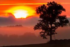 在日出的鹿立场 免版税图库摄影