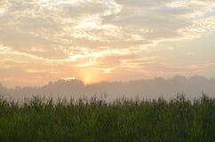 在日出的麦地 免版税库存照片