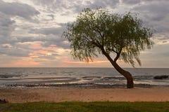 在日出的结构树 库存图片