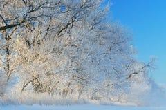 在日出的结霜的树 免版税库存图片