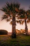 在日出的Palmtrees 库存照片