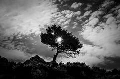 在日出黑色白色的美丽的树 库存图片