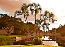 在日出以后的佛罗里达 库存图片
