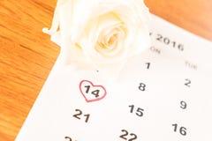 在日历的白色玫瑰与2月14日Valentin日期  免版税库存图片