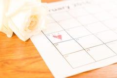 在日历的白色玫瑰与2月14日Valentin日期  库存图片