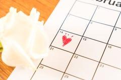在日历的白色玫瑰与2月14日Valentin日期  图库摄影