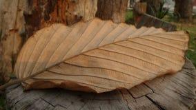 在日志的干燥棕色叶子 免版税库存照片