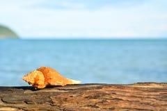 在日志的海壳 库存照片