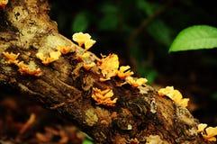 在日志的真菌蘑菇 免版税库存照片
