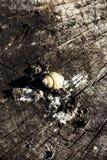 在日志的蜗牛壳 免版税库存图片