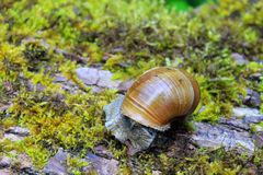 在日志的蜗牛 免版税库存图片
