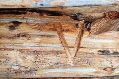 在日志裁减的罗马数字5以确定江鳕定货的刀子,在树的裁减 免版税图库摄影