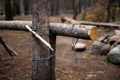 在日志附近被栓的绳索 库存照片