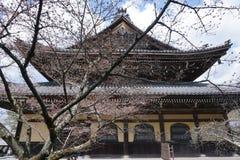 在日本寺庙前面的Cherryblossom树 免版税库存照片