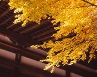 秋叶在镰仓 库存照片