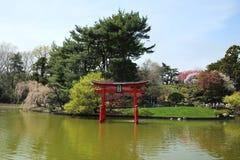 在日本庭院的佐仓开花在布鲁克林植物园里 库存照片
