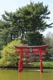 在日本庭院的佐仓开花在布鲁克林植物园里 免版税库存照片