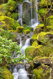 在日本庭院的瀑布在春天 库存图片