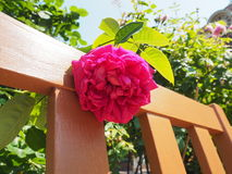 在日本采取的花 图库摄影