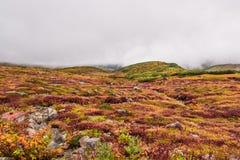 在日本阿尔卑斯山的风景 库存照片