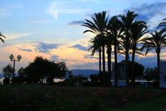 在日落下的棕榈树 库存照片