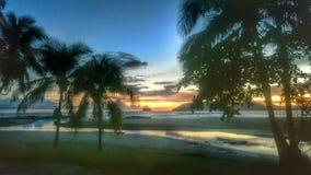 在日落下的棕榈 库存照片