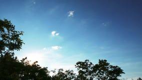 在日落与浮动云彩和太阳强光的天空蔚蓝通过树和飞行的飞机绿色叶子  影视素材