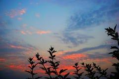在日落五颜六色的背景的叶子 库存照片