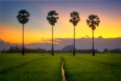 在日落以后的微明在领域和棕榈树 库存照片
