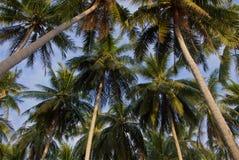 在日落光的热带棕榈树上面 库存图片