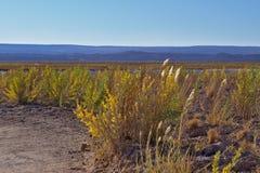 在日落光的美丽的盛大的草在一个有风下午 库存图片