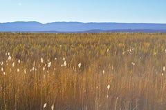 在日落光的美丽的茂盛的色的草与mountai 库存照片